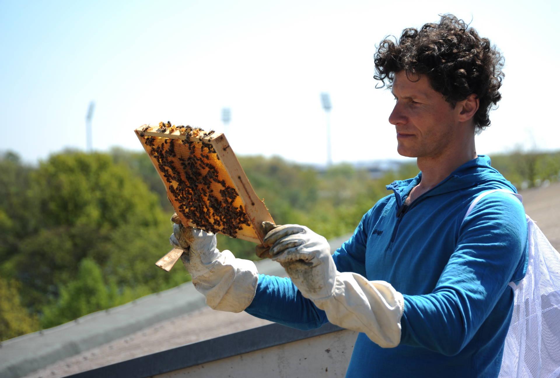 Bienen In Nurnberg