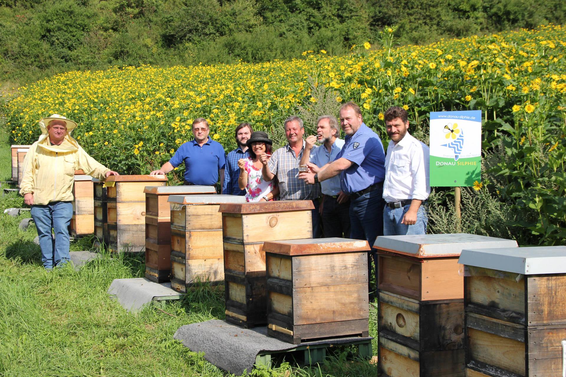 Die bis zu 3,50 Meter hohe Silphie ist auch eine ideale Bienenweide. Imker ernten pro Hektar bis zu 150 Kilogramm Honig.