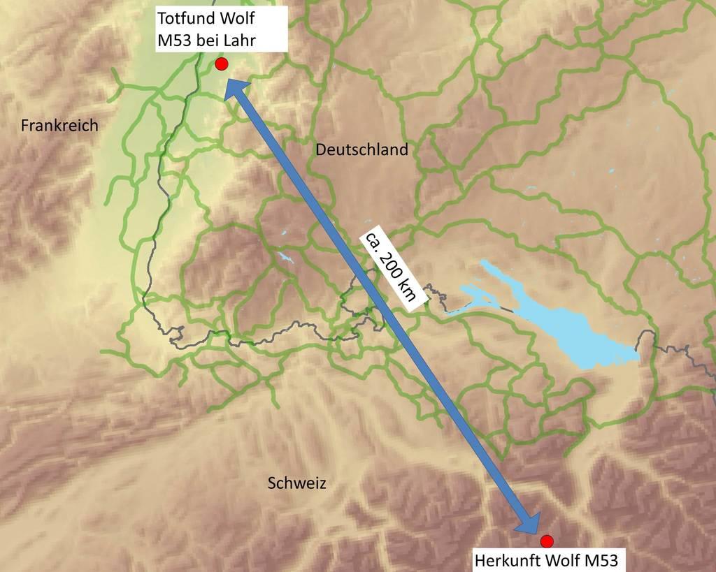 Der bei Lahr tot aufgefundene Wolf stammte aus der Schweiz. (Karte: FVA Freiburg)
